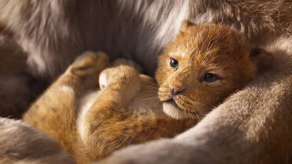 Levji kralj