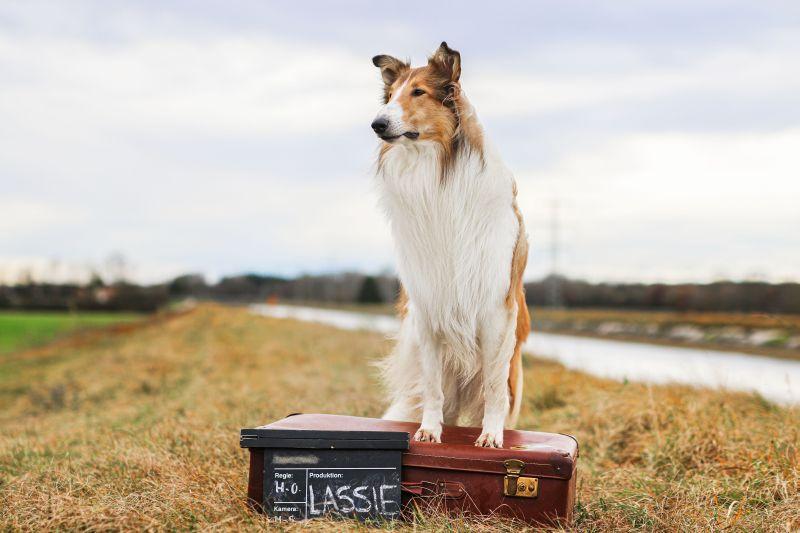 Kino Lassie